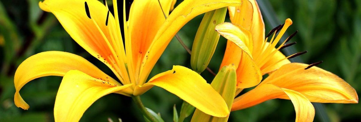 In martie se planteaza florile verii