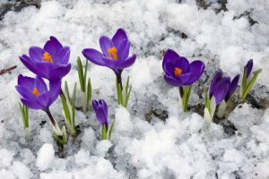Plante vedetă la final de iarnă