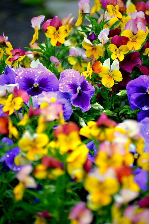 Flori de toate culorile
