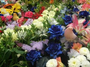 flori colorate, Flori de toate culorile