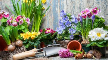 Îngrijirea grădinii în martie