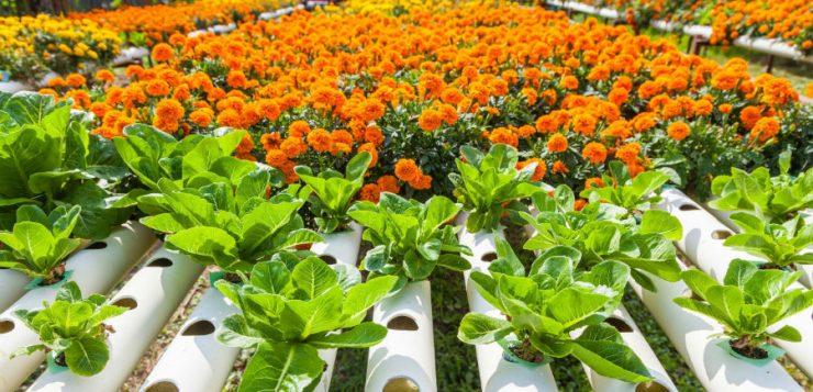 Cum pot crește plantele fără pământ