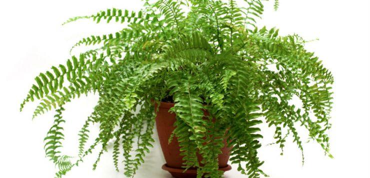 Plante potrivite pentru un balcon nordic