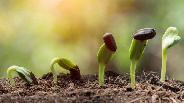 De ce nu încolțesc semințele de legume