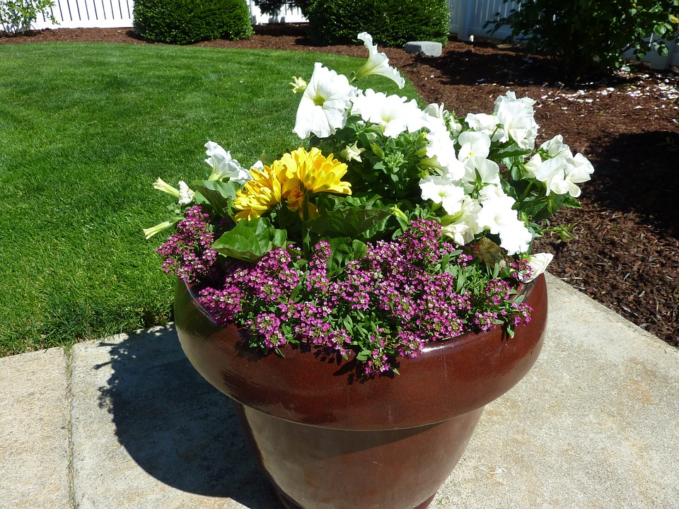 potted-plant-269671_960_720