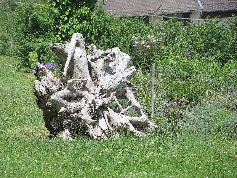 elemente decorative radacina de arbore