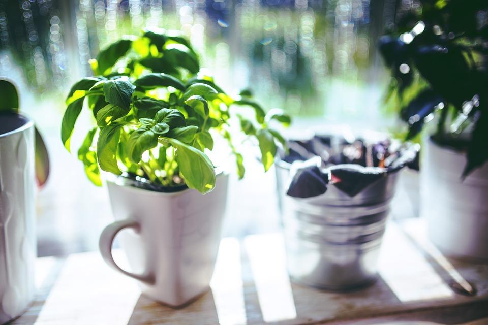 Plante impotriva mustelor