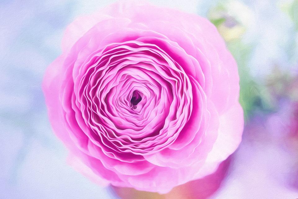 flower-1312040_960_720