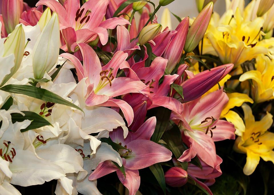 lilies-1201404_960_720