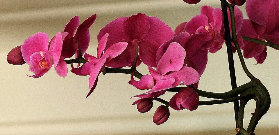orchid-1357032_960_720