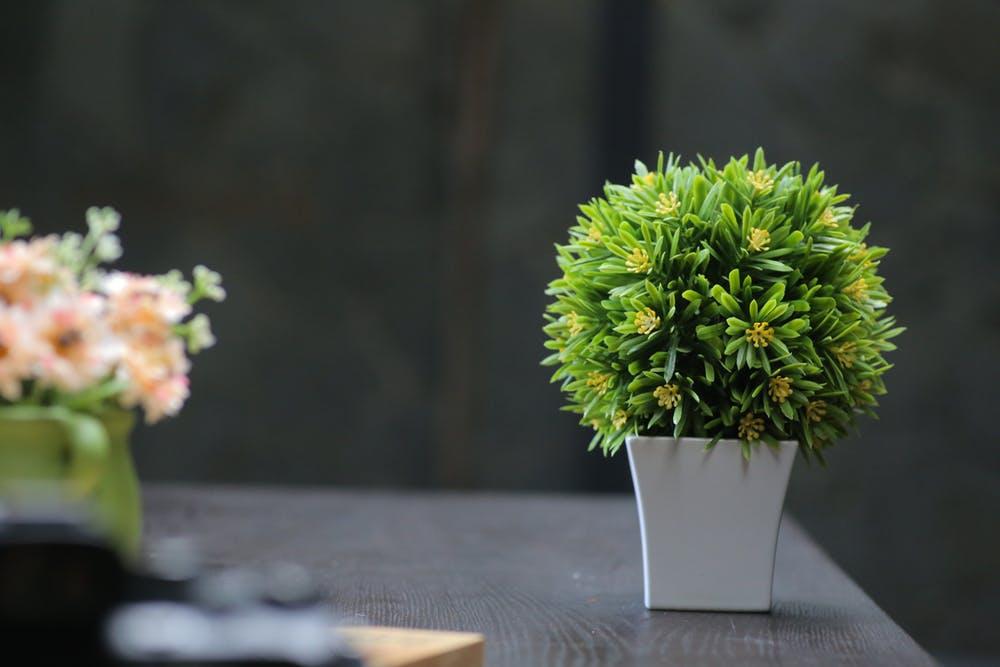 Plantele de interior absorb chimicalele din aerul din casa