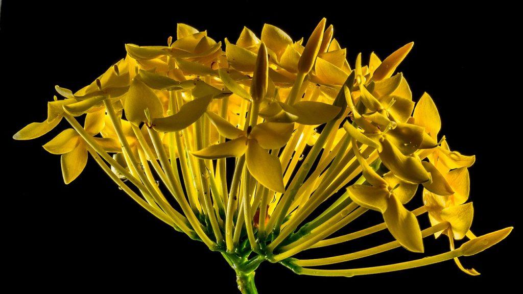flower-196722_1280