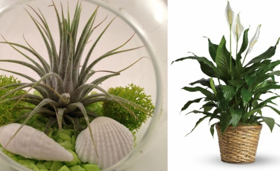plante-care-absorb-umiditatea-din-camera-indoor-plants-that-absorb-humidity-1-980x600