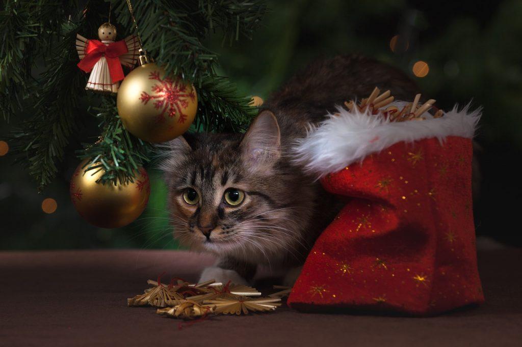 Pisica si pomul de Craciun