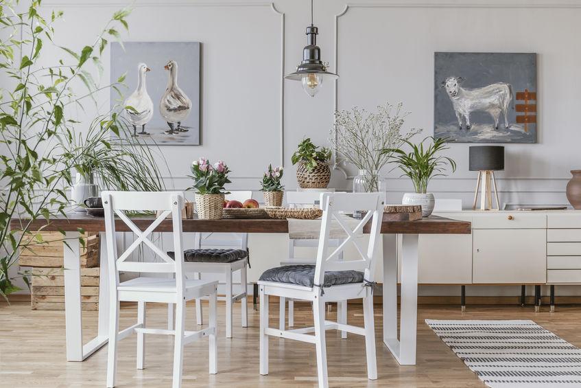 plante casa decor natural