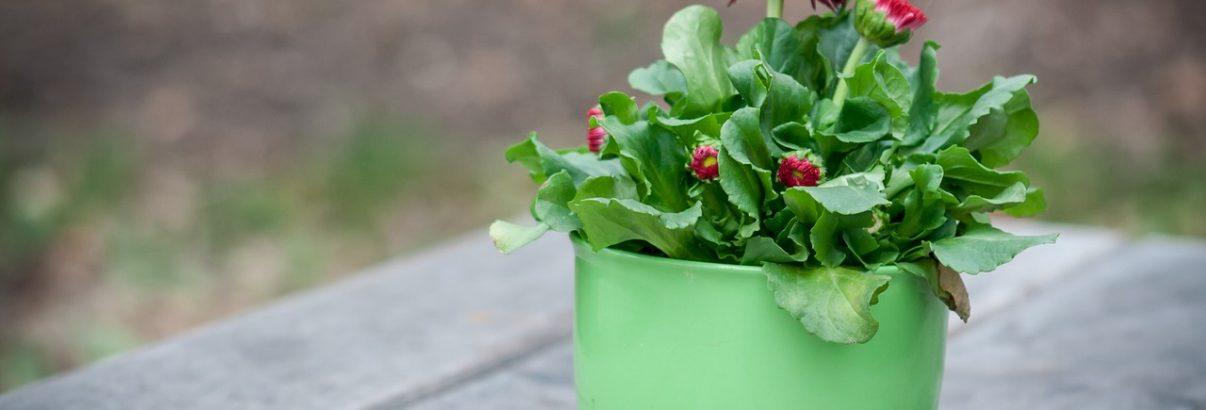Cele mai bune ingrasaminte naturale pentru plantele din ghiveci