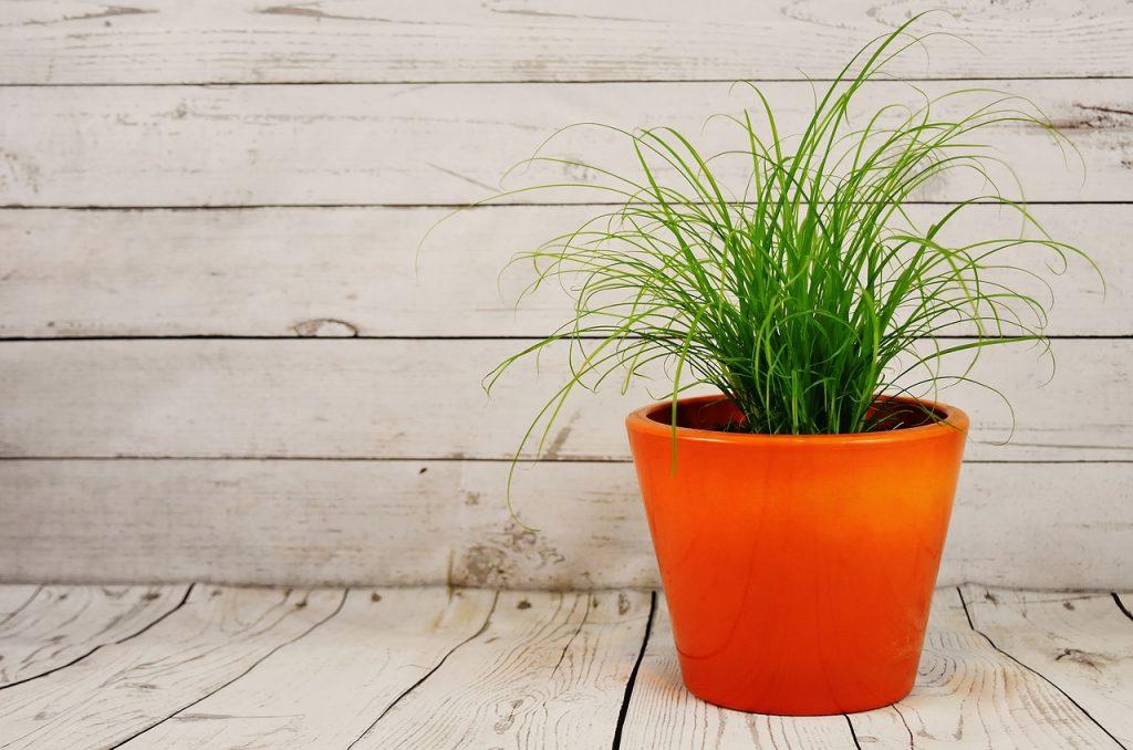 Ce trebuie sa stii despre ghivecele pentru plante