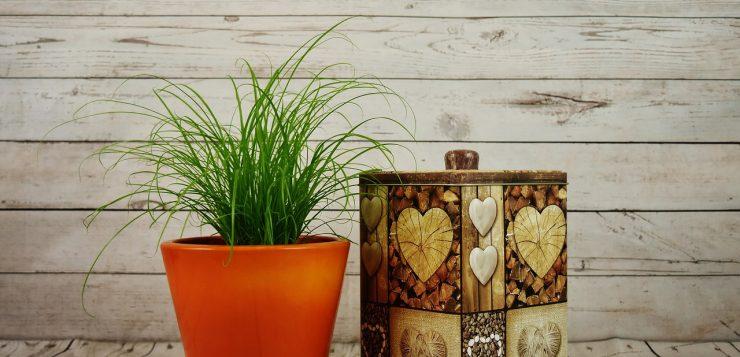 planta in ghiveci ghivecele pentru plante