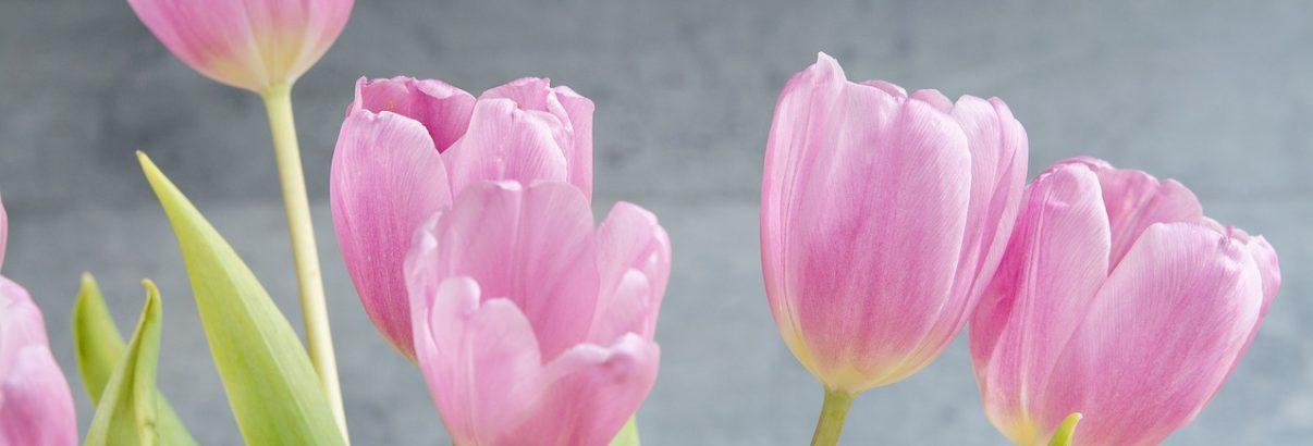 Ce nu stiai despre lalele, floarea Turciei