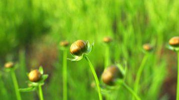 Ciupirea plantelor