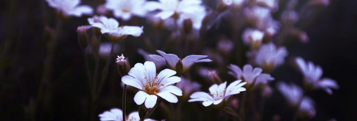 Flori fără pretenții