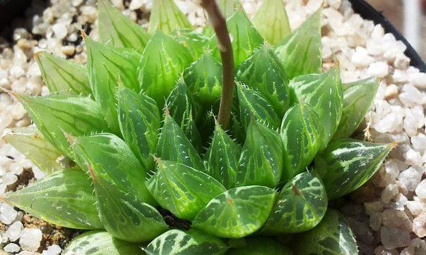 plante interesante