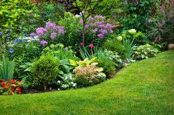 plante pentru gradina
