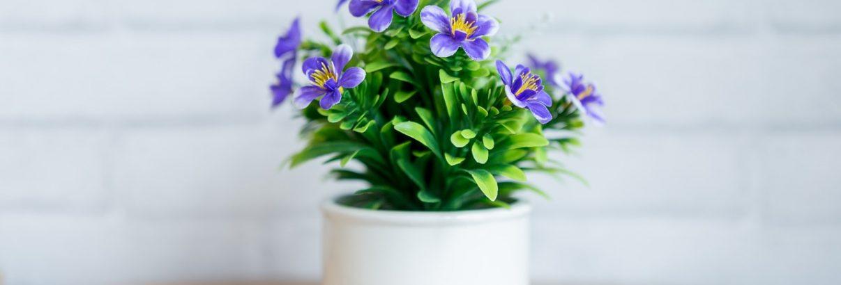 Ce plante cu flori alegi pentru casa ta