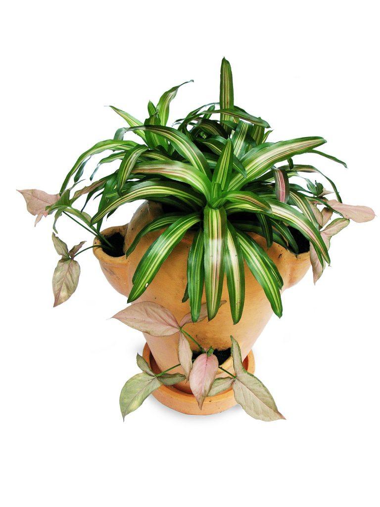 flori pentru casa ta