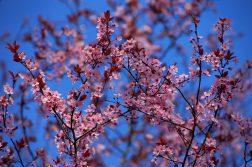 cer senin de primăvară