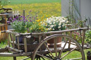 rustic în grădină