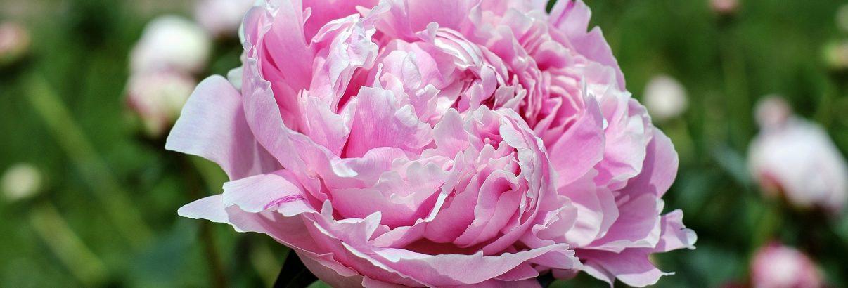 Florile lunii aprilie. Câteva idei și câteva sfaturi
