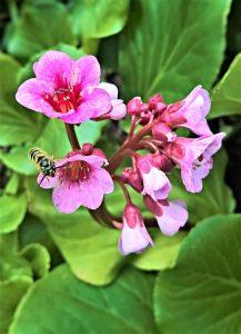 floare de primăvară