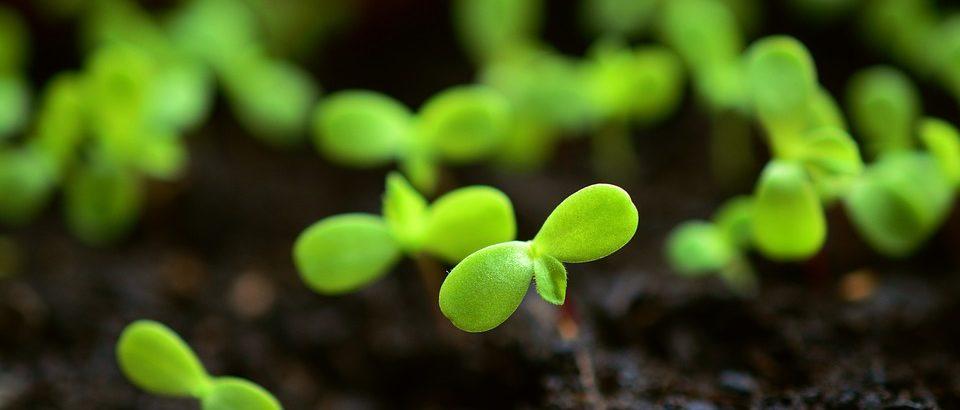 Semințele și tainele lor