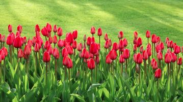 inmultire flori