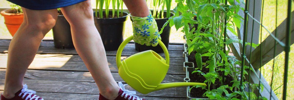 Verdețuri proaspete în jardinieră