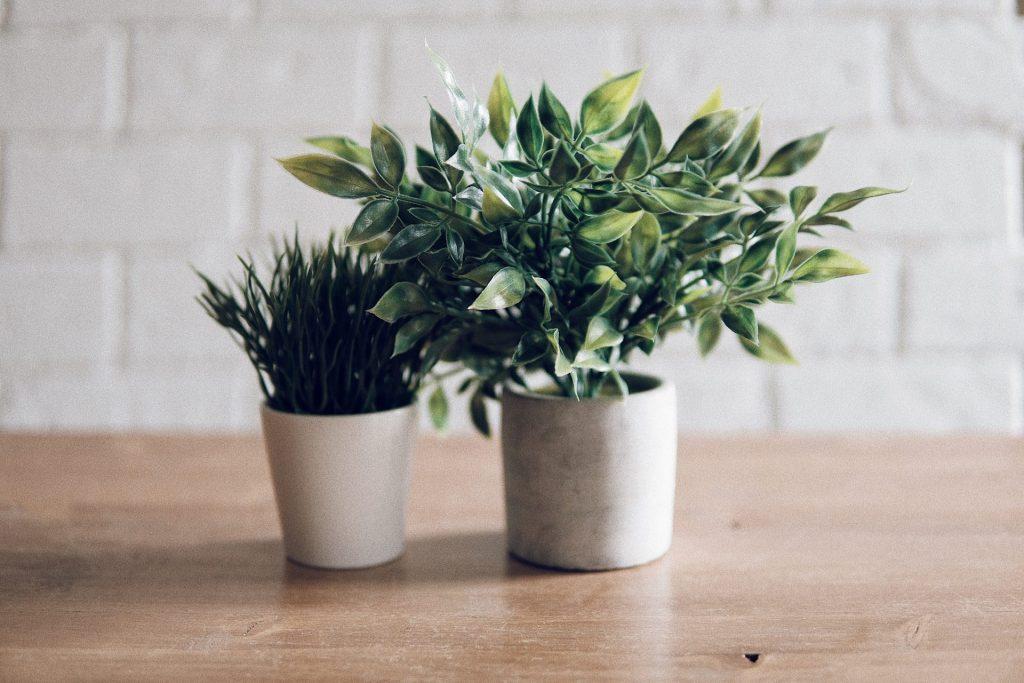 Plantele de apartament ideale