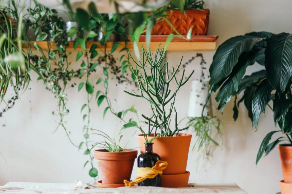 Apa oxigenata, tratament binefăcător pentru plantele din apartament