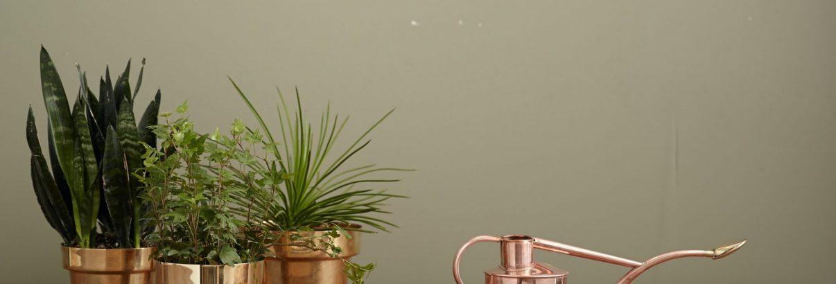 Apa oxigenată, tratament binefăcător pentru plantele din apartament