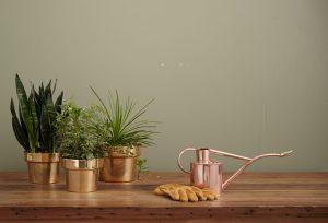 plante de apartament, ghivece de cupru, apa oxigenata