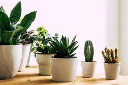 Plantele de apartament ideale și cum le alegi în funcție de personalitatea ta