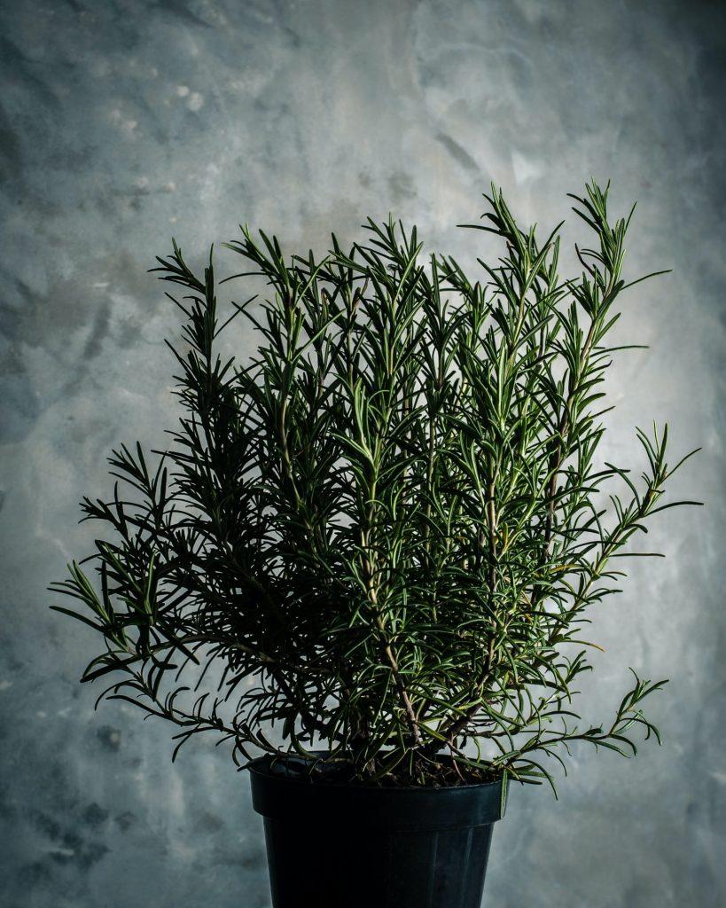 plante pentru dormitor