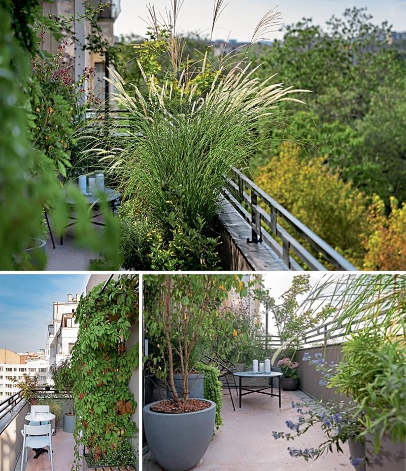 balcon plante