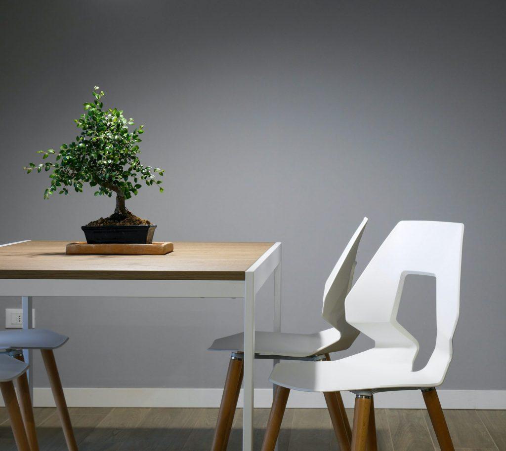oaza verde, plante de apartament