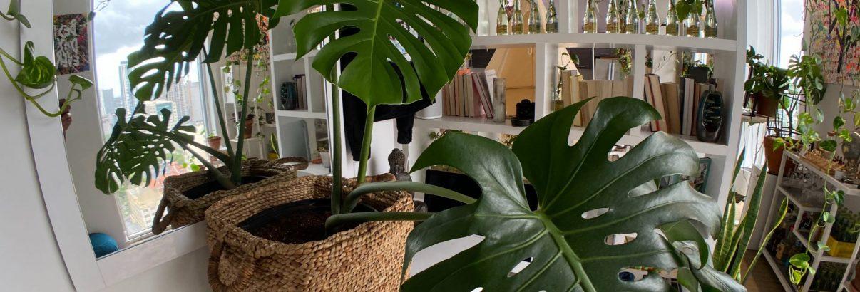 Oază verde în fiecare camera. Sfaturi pentru decorarea cu plante de apartament