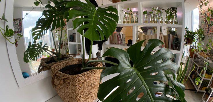 plante de apartament, in casa plante, oaza verde