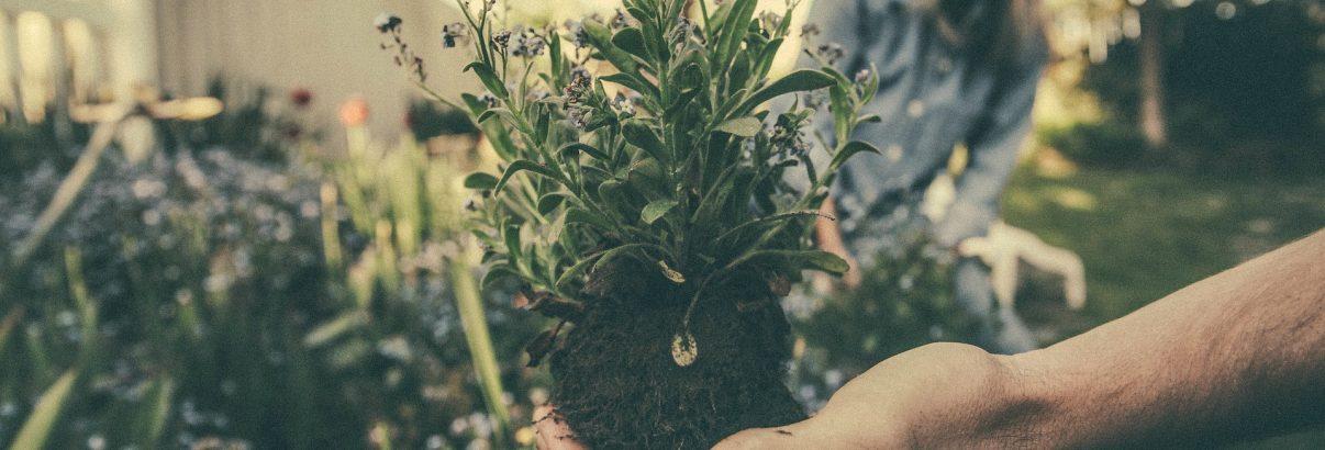 Cele mai mari greșeli de grădinărit pe care nu-ți dai seama că le faci