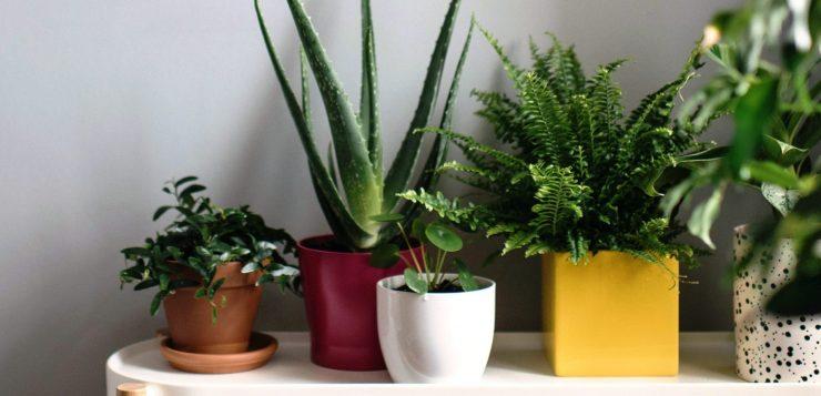 Îngrijirea plantelor de interior primăvară: 5 pași pentru fericirea lor